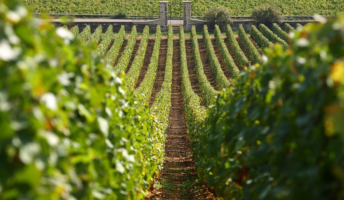 Французские виноградники. Фото: центр кульуры вина «Дерех ха-Яин»