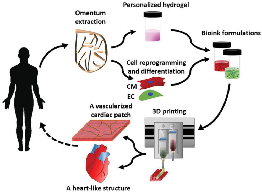 Схема создания 3D-сердца