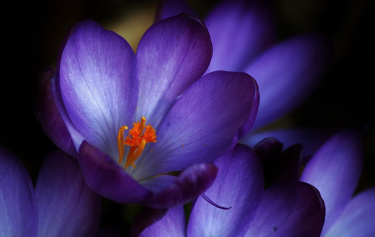 Шафран: Saffron Tech выращивает шафран в умных фермах