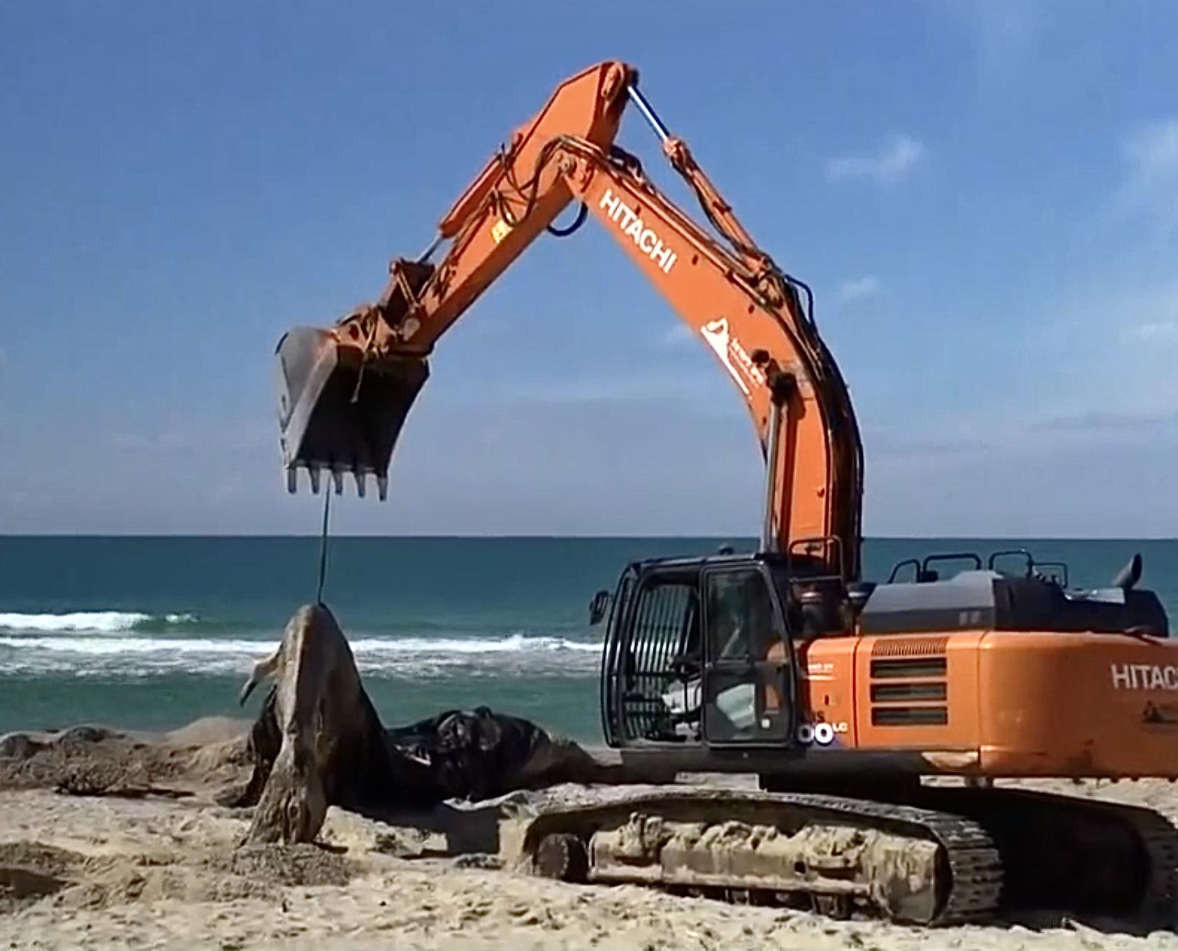 Гигантский кит: кадр из сюжета Компании Кан Хадашот